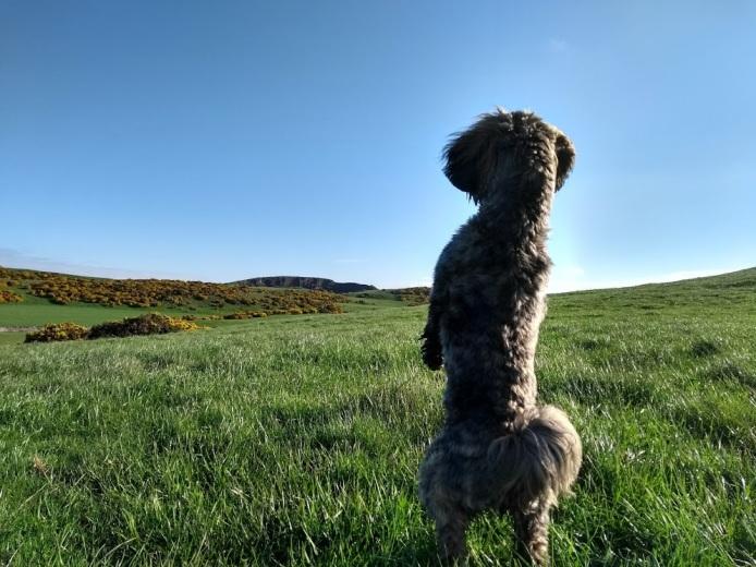 Biel | Walking East Lothian