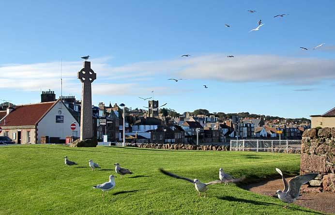 gulls-north-berwick.jpg