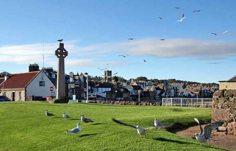 gulls-north-berwick.jpg