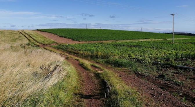 The Gododdin Heritage Trail: Barnes Castle-East Linton-Hailes