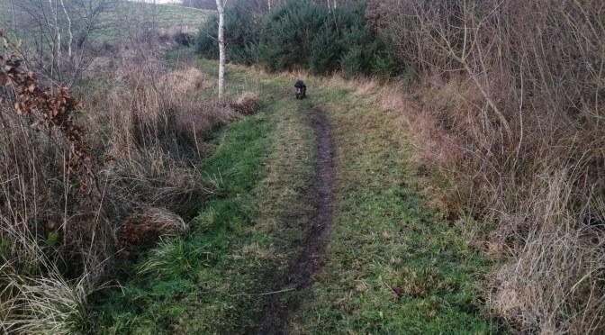 The Gododdin Heritage Trail: The Colstoun Loop